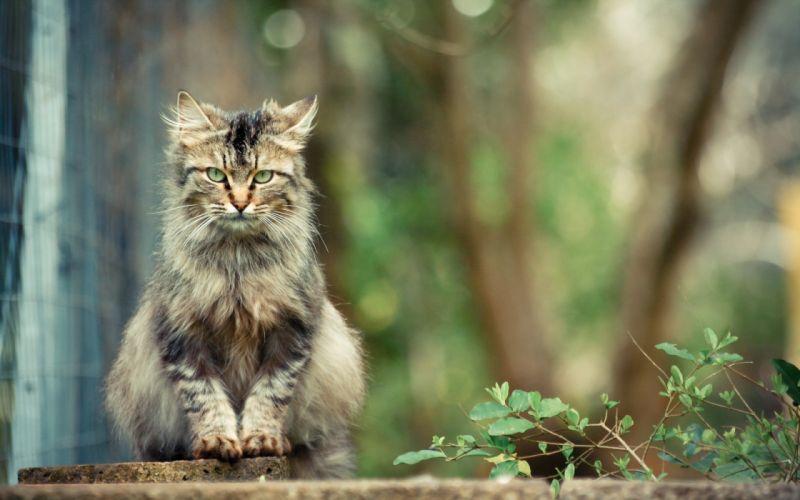 animals cats wallpaper