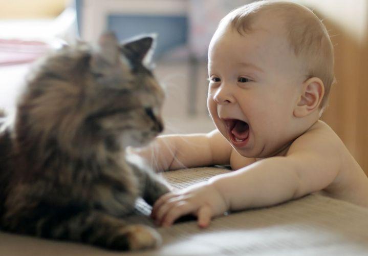 baby cat joy wallpaper