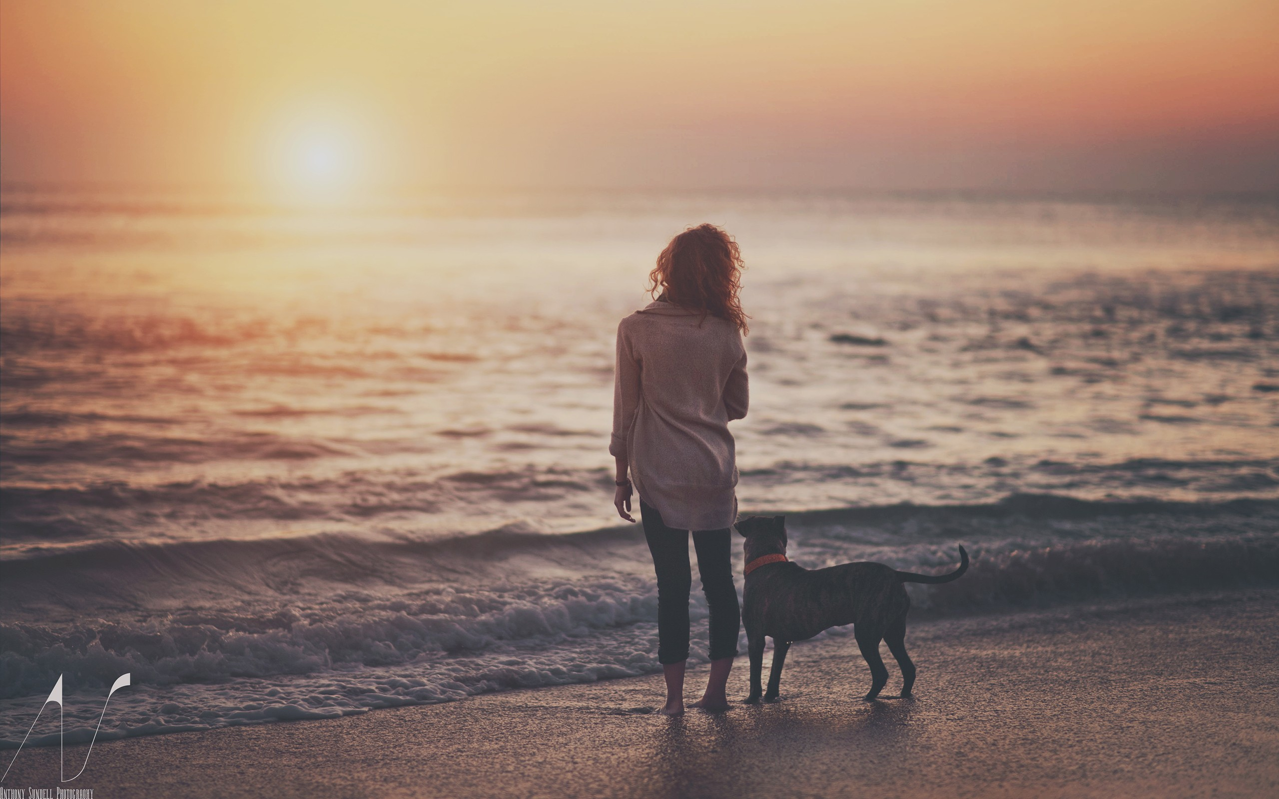 dog beach sunset sunlight redhead warm wallpaper | 2560x1600