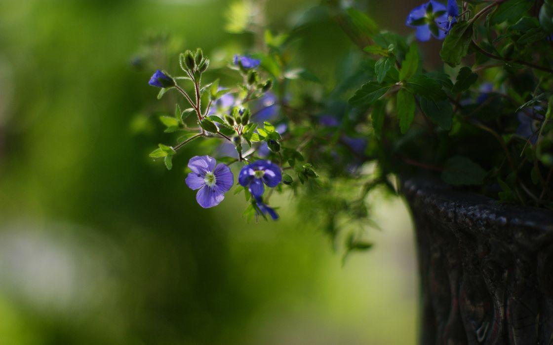 Flower Macro Green wallpaper