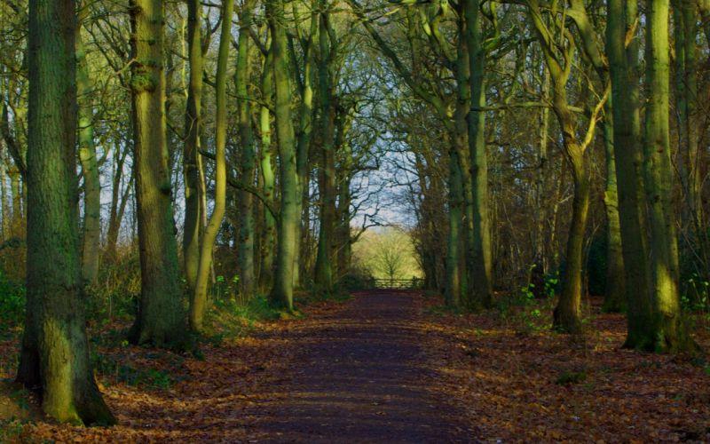 forest trail landscape nature path Woodland wallpaper