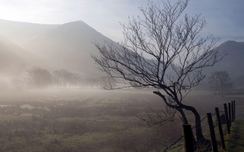 landscape tree morning nature fence fog wallpaper
