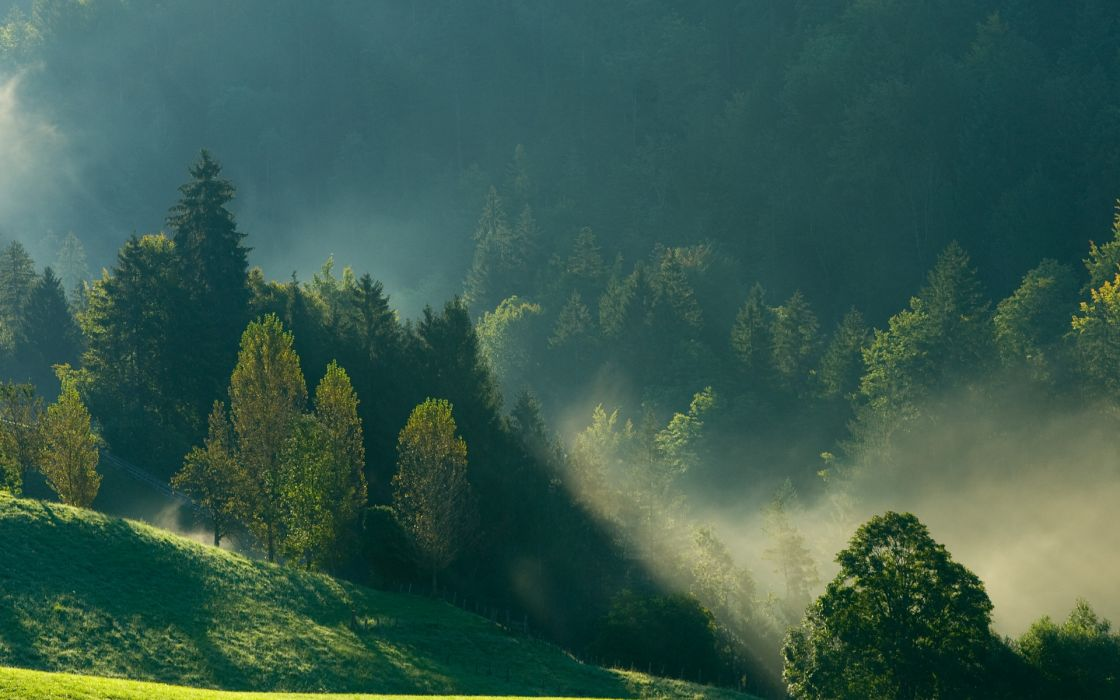 morning mountains nature forest mist wallpaper