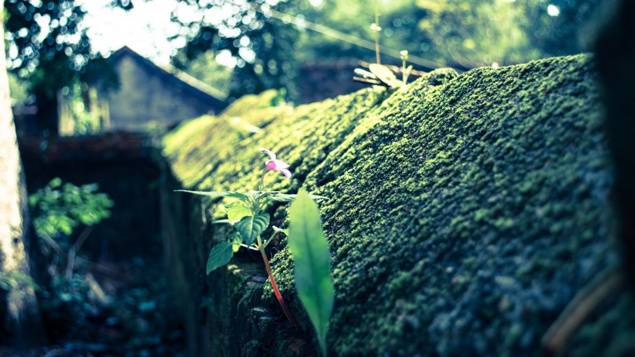 Moss Macro flowers wallpaper