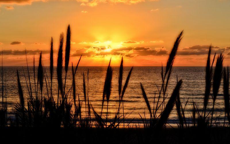 Sunlight Sunset Ocean Plants wallpaper