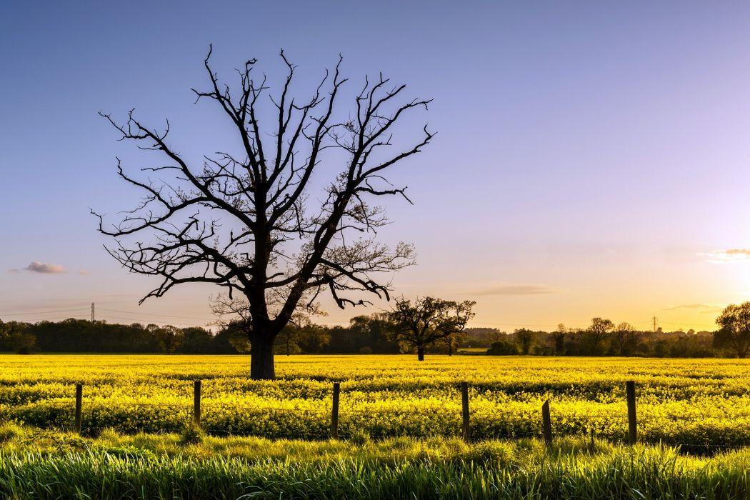 field  tree  fence  rape  landscape wallpaper