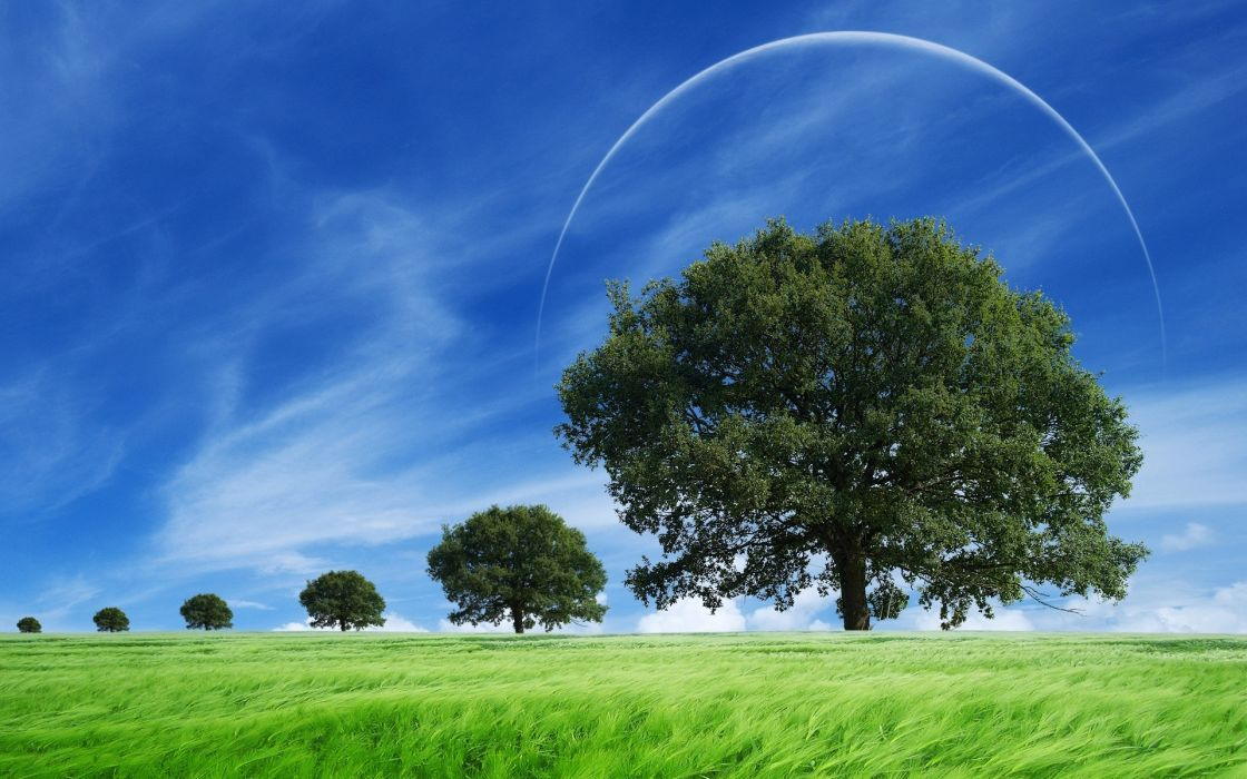 field trees landscape wallpaper