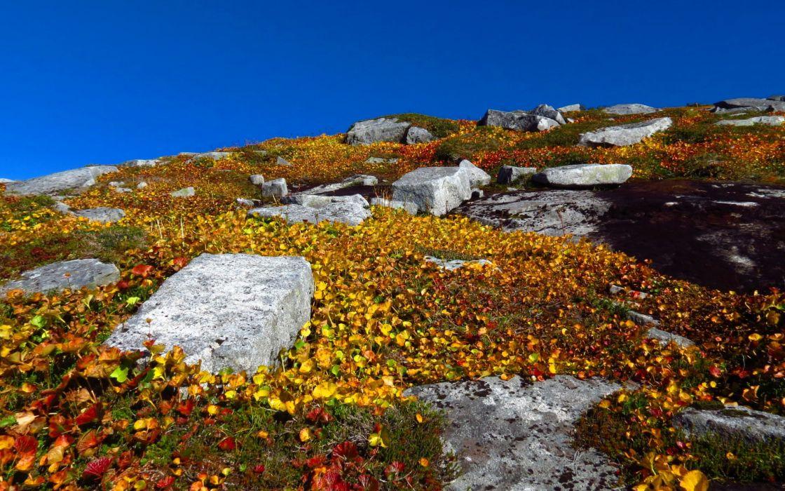 hill  sky  plants  rocks  leaves  yellow wallpaper