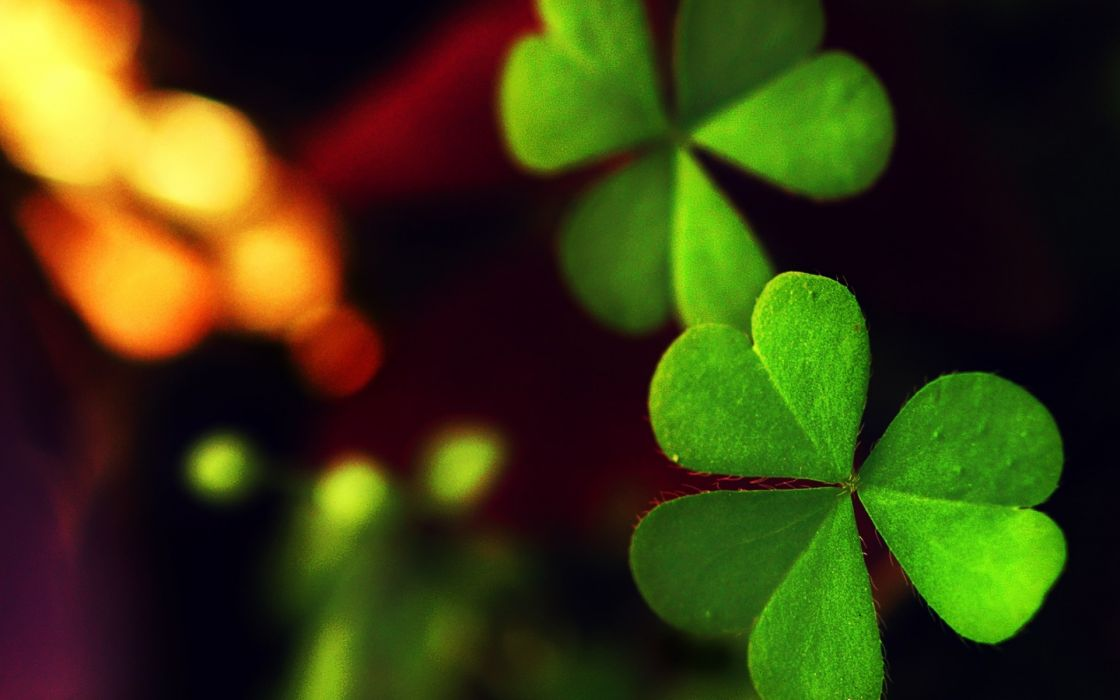 macro leaf leaf green clover wallpaper