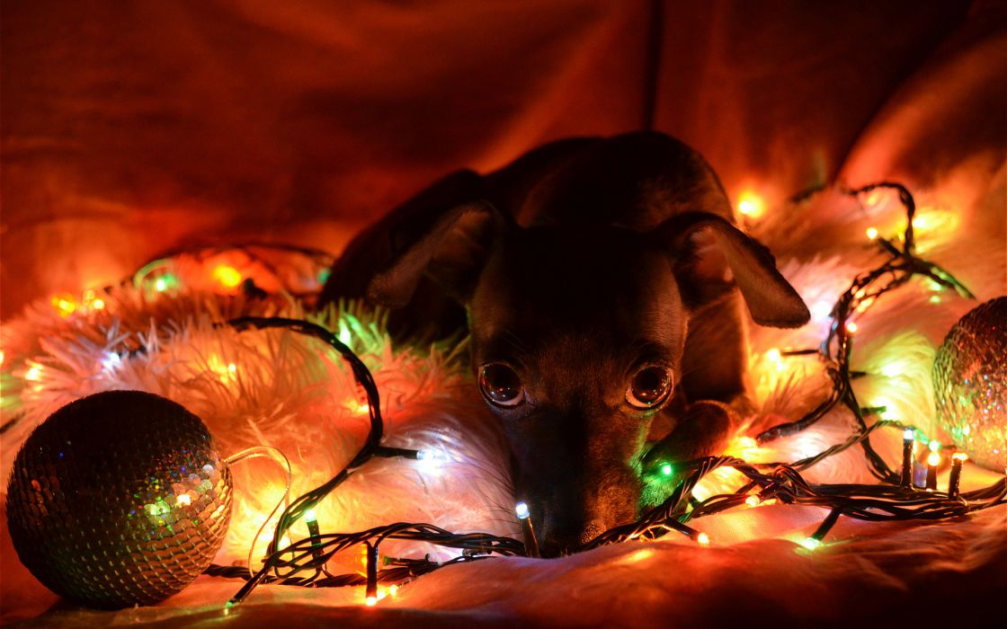 lights new year christmas dogs wallpaper
