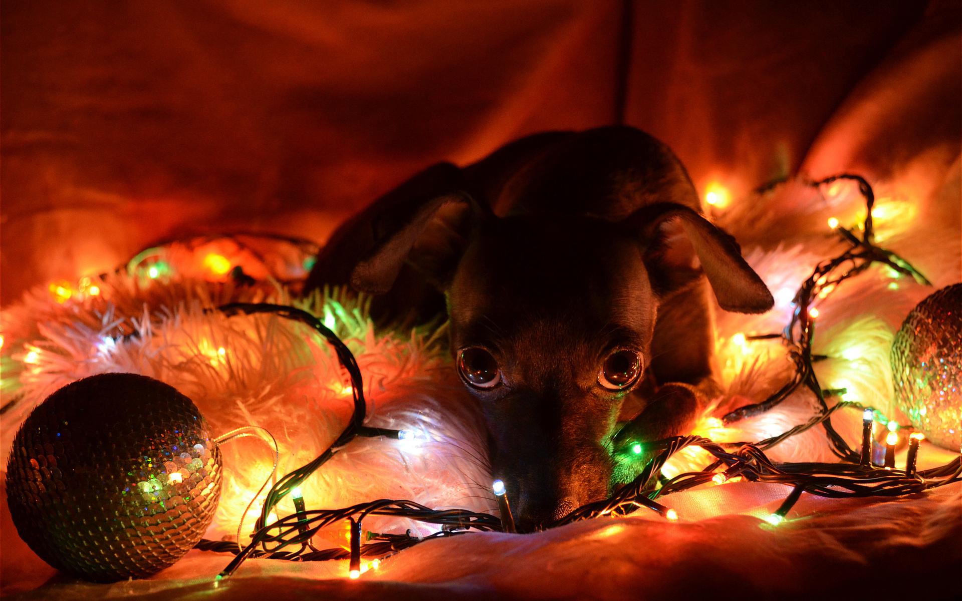lights new year christmas dogs wallpaper 1920x1200 69033 wallpaperup