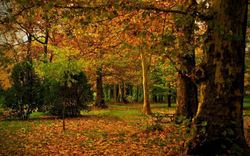 autumn forest park landscape wallpaper