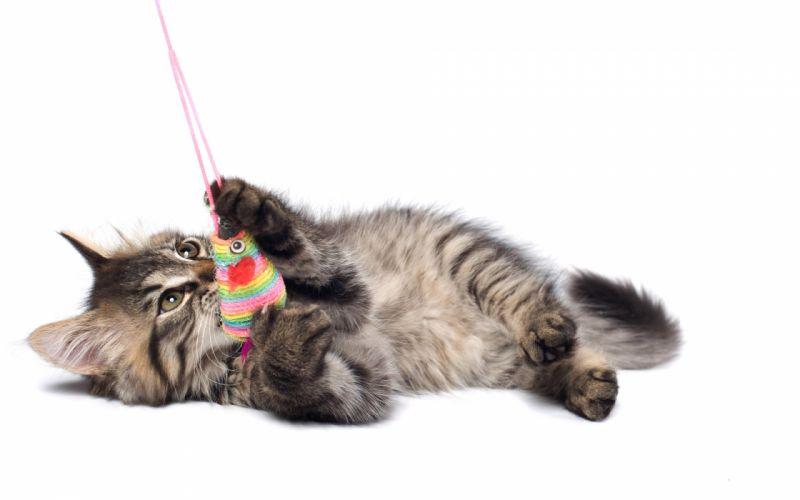 cat toy kittens wallpaper
