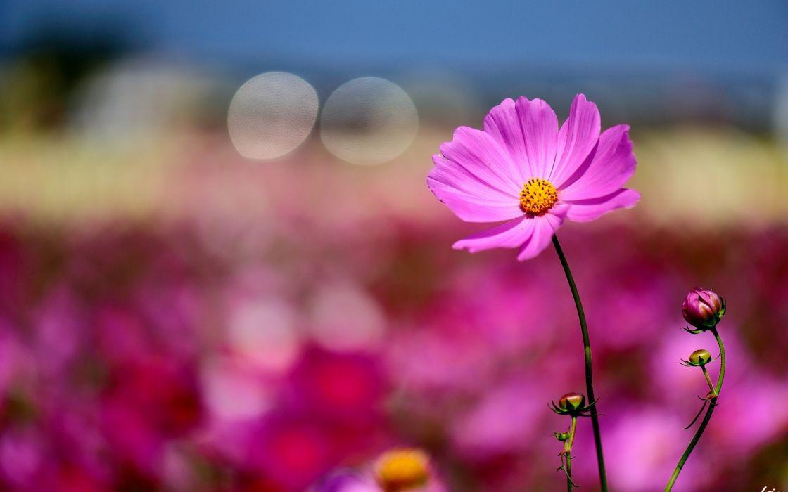 Flower Macro Bokeh wallpaper