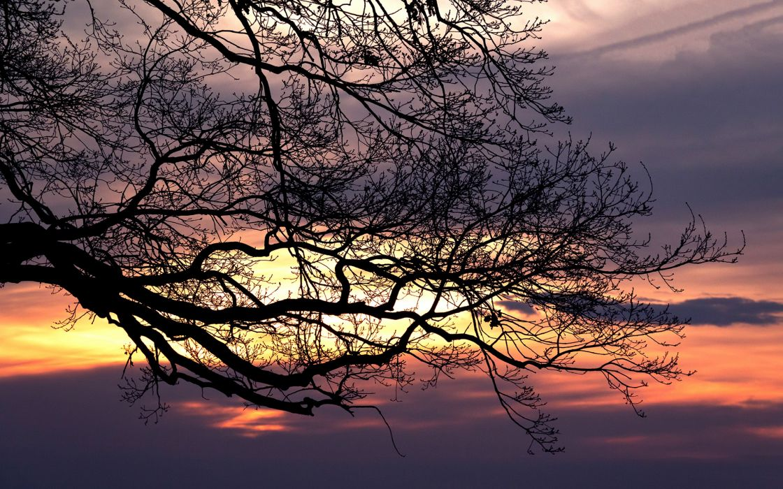 Sunset Branches Tree sky wallpaper