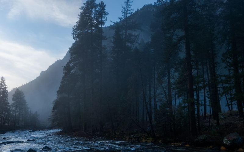 Yosemite Fog Mist Trees Mountain Forest River wallpaper