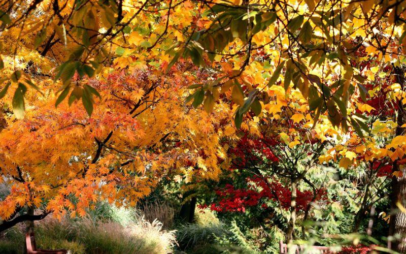 autumn trees leaves nature wallpaper