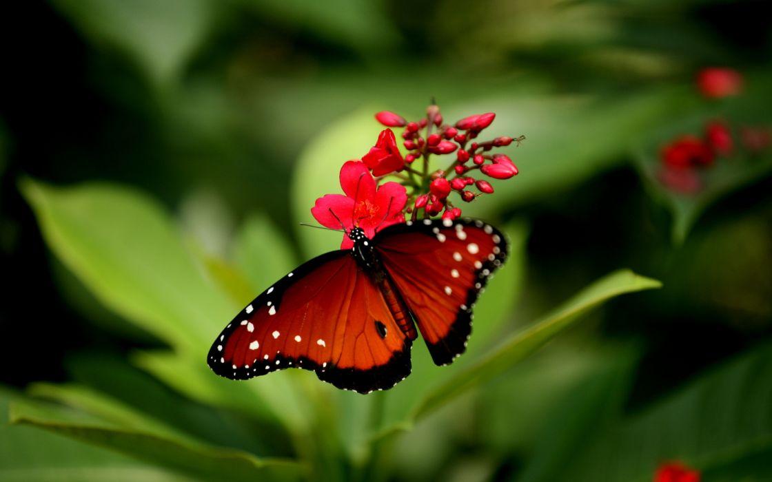 butterfly flower close-up     e wallpaper