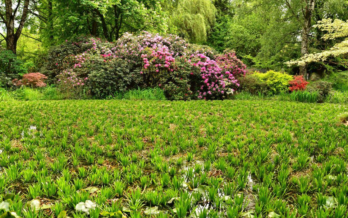 garden pond park trees shrubs nature landscape wallpaper