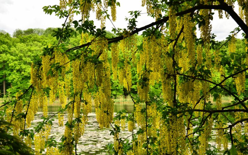 lake trees branches flowers nature wallpaper
