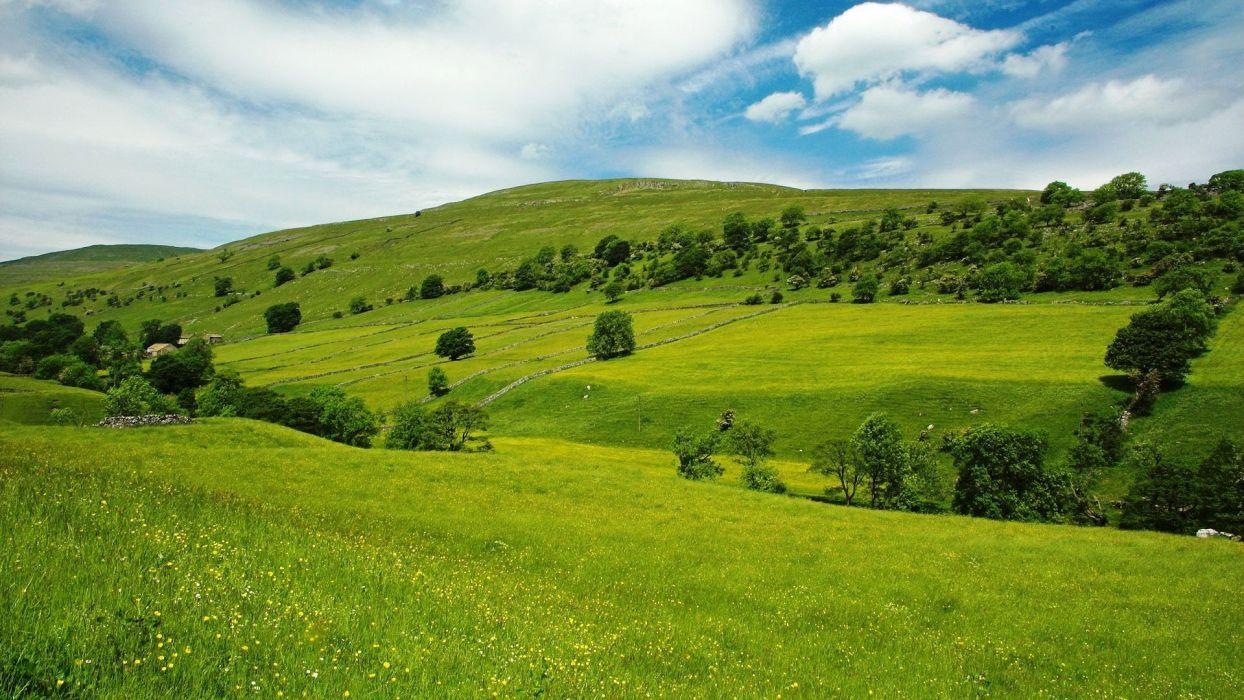 Landscape  grass  trees  herbs  home  sky wallpaper