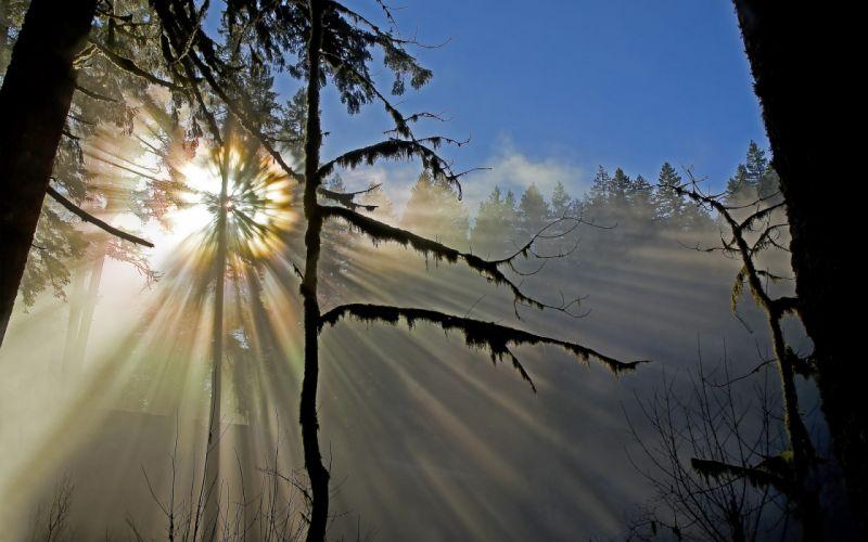 nature forest sun sunshine trees moss wallpaper