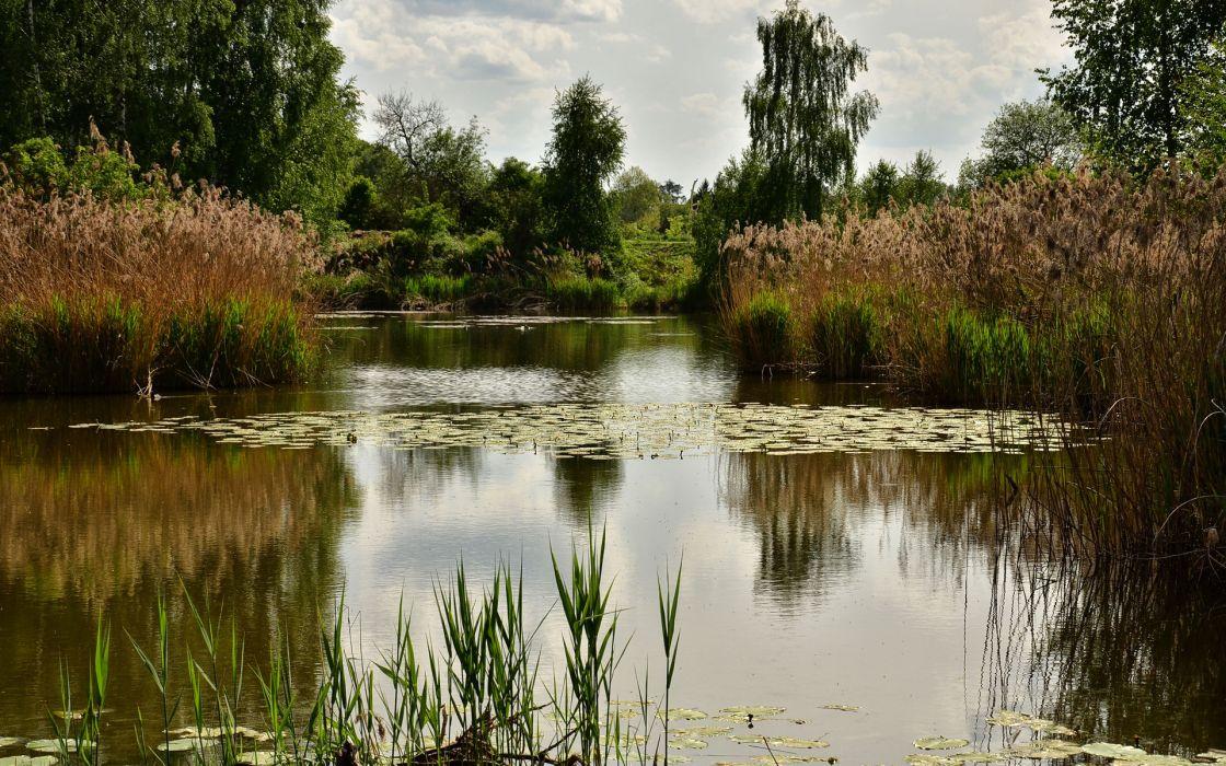pond trees plants landscape reflection wallpaper