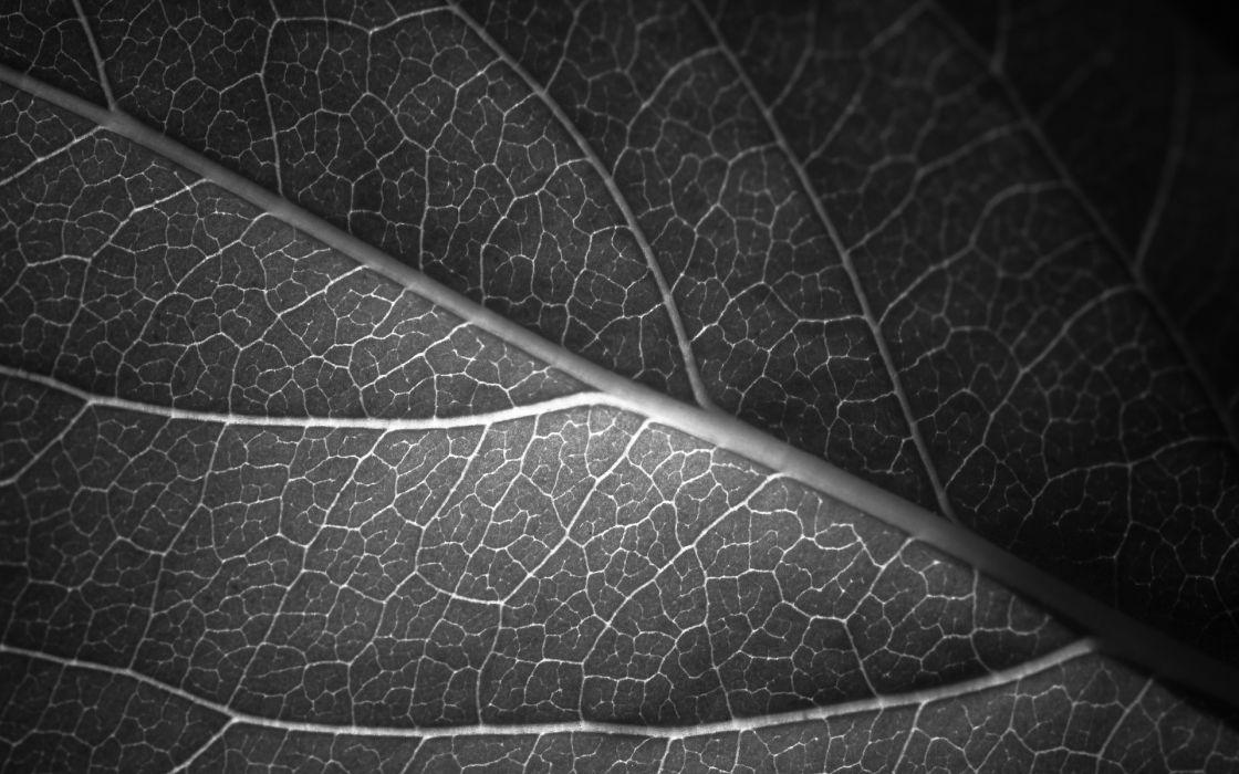 Leaf Vein Macro BW wallpaper