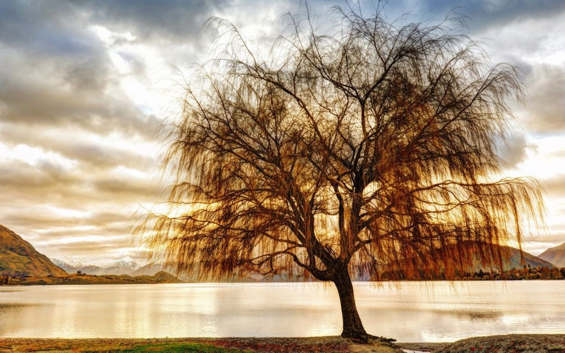 shore laken tree reflection wallpaper