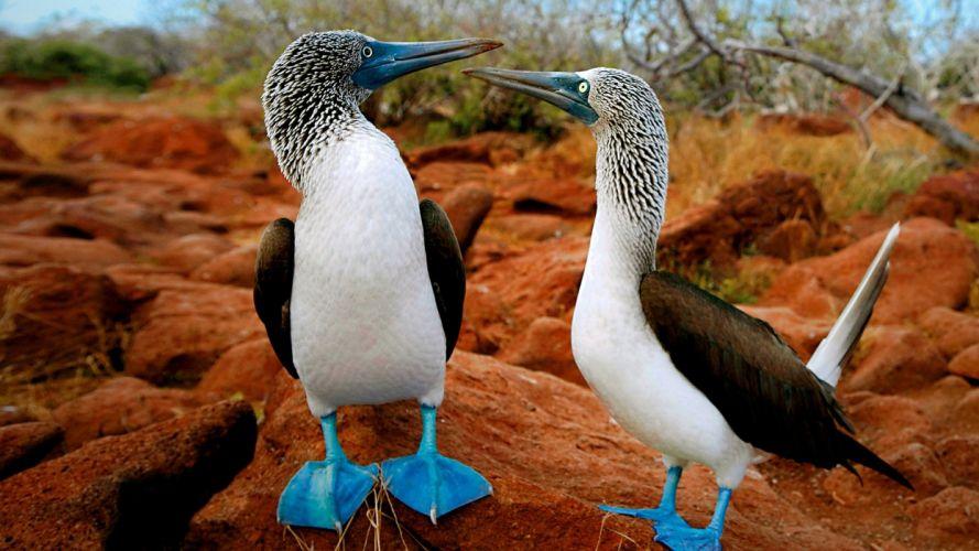 Birds Love wallpaper