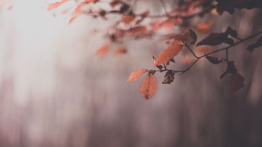 nature trees leaves autumn wallpaper