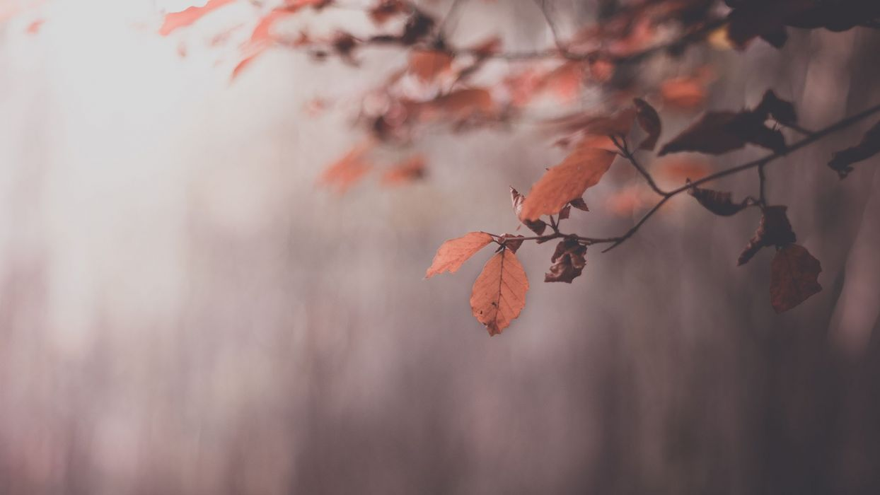 nature trees leaves autumn wallpaper