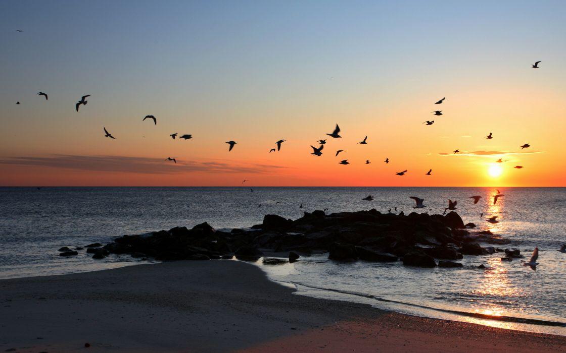 beaches sunset ocean sea birds wallpaper