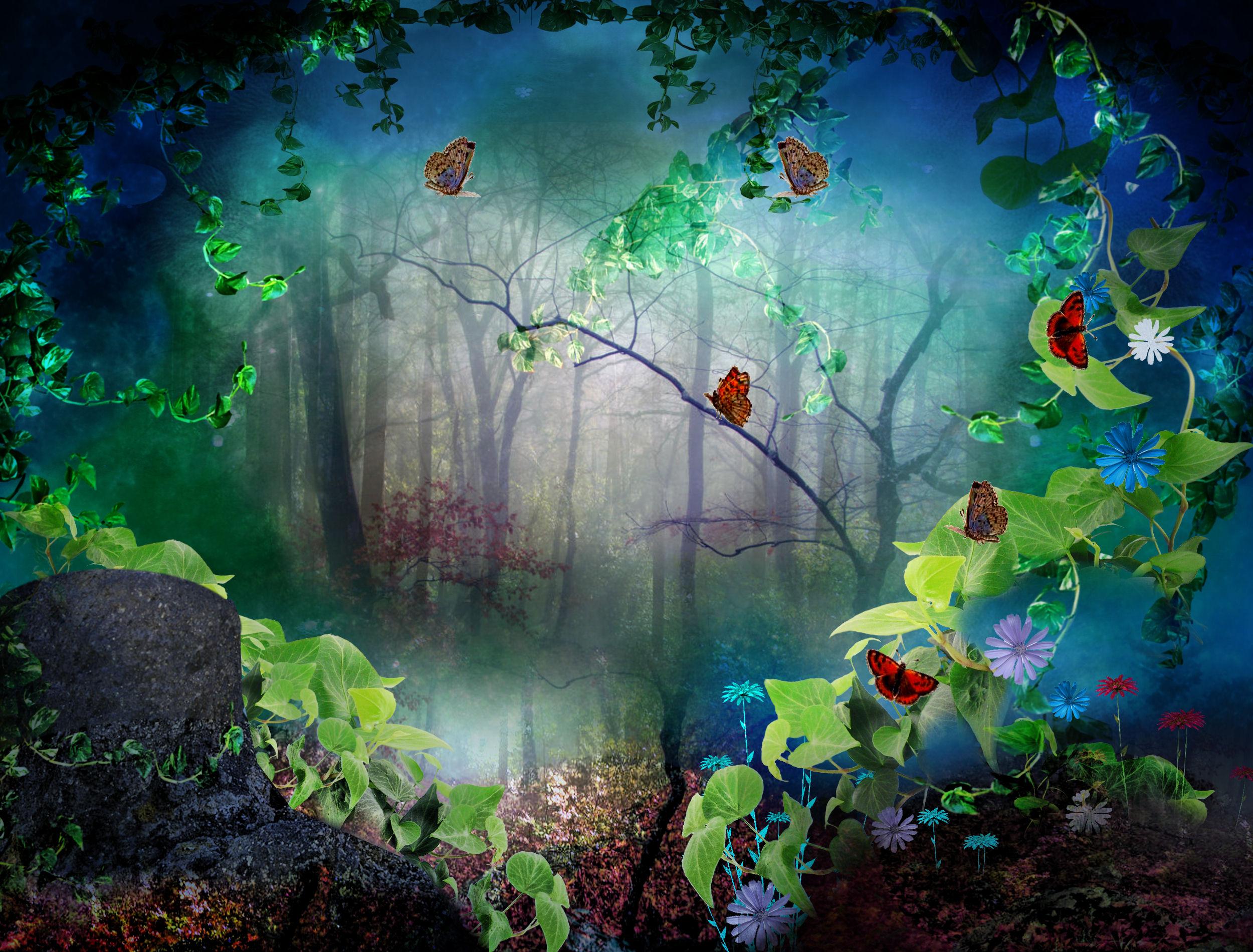 rainforest butterfly wallpaper - photo #9