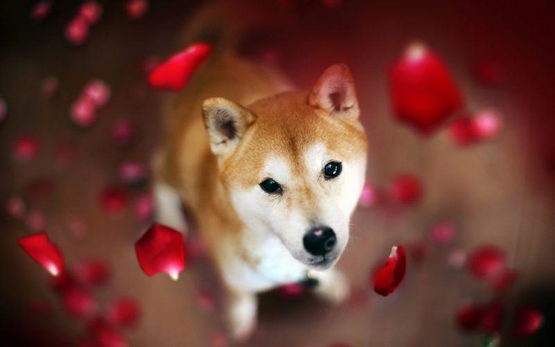 Dog Petals wallpaper