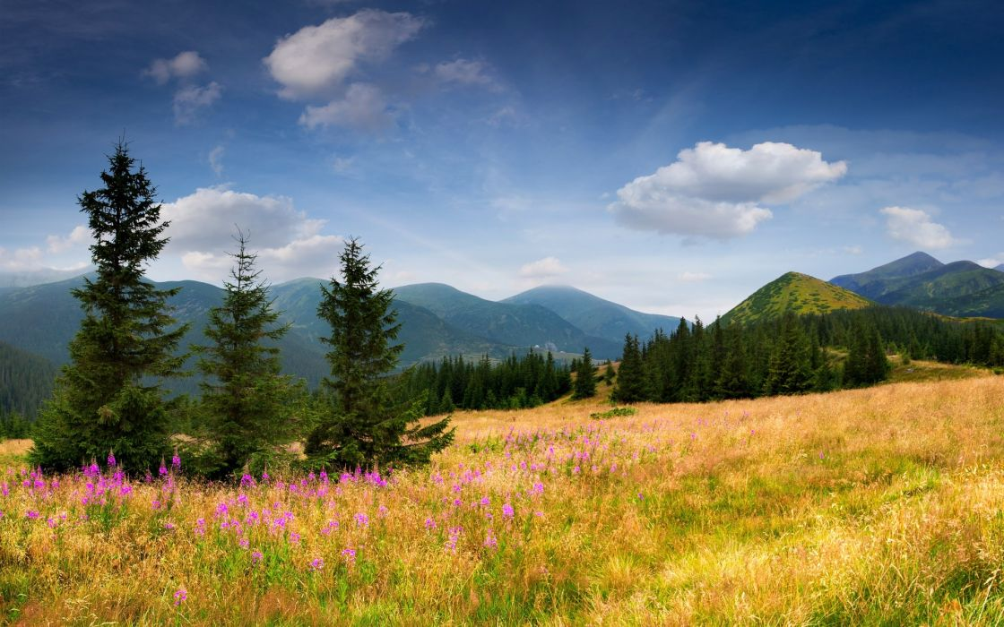 field mountains trees spruce trees grass flowers slope sky clouds nature flowers wallpaper