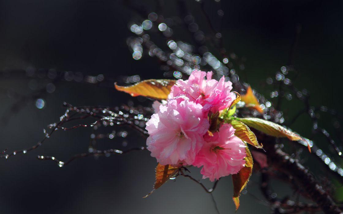 Flower Macro     r wallpaper