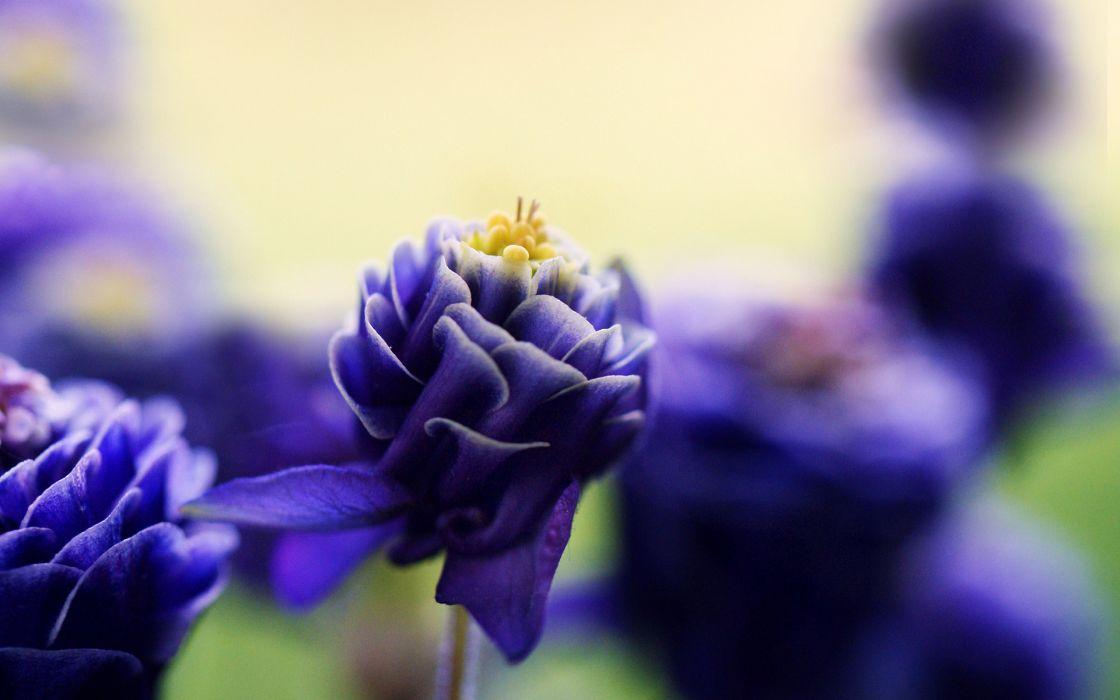 Flower Macro Purple wallpaper