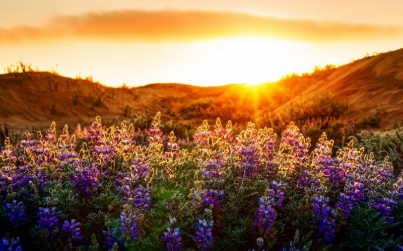 flowers light nature landscape wallpaper