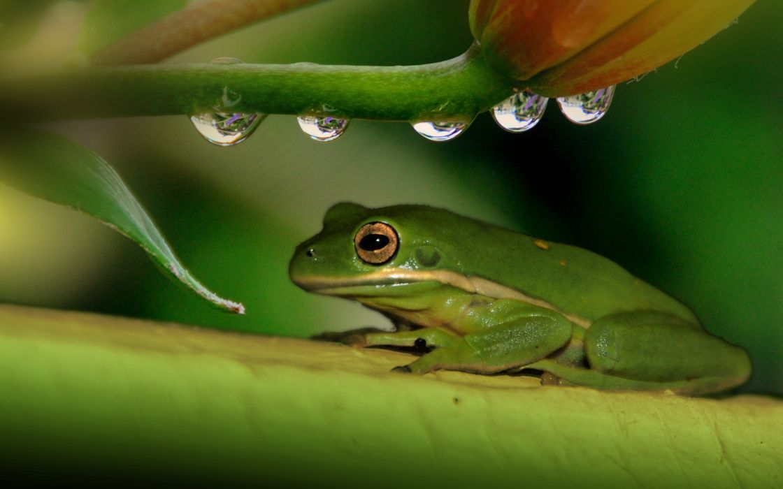 frog plant drops wallpaper