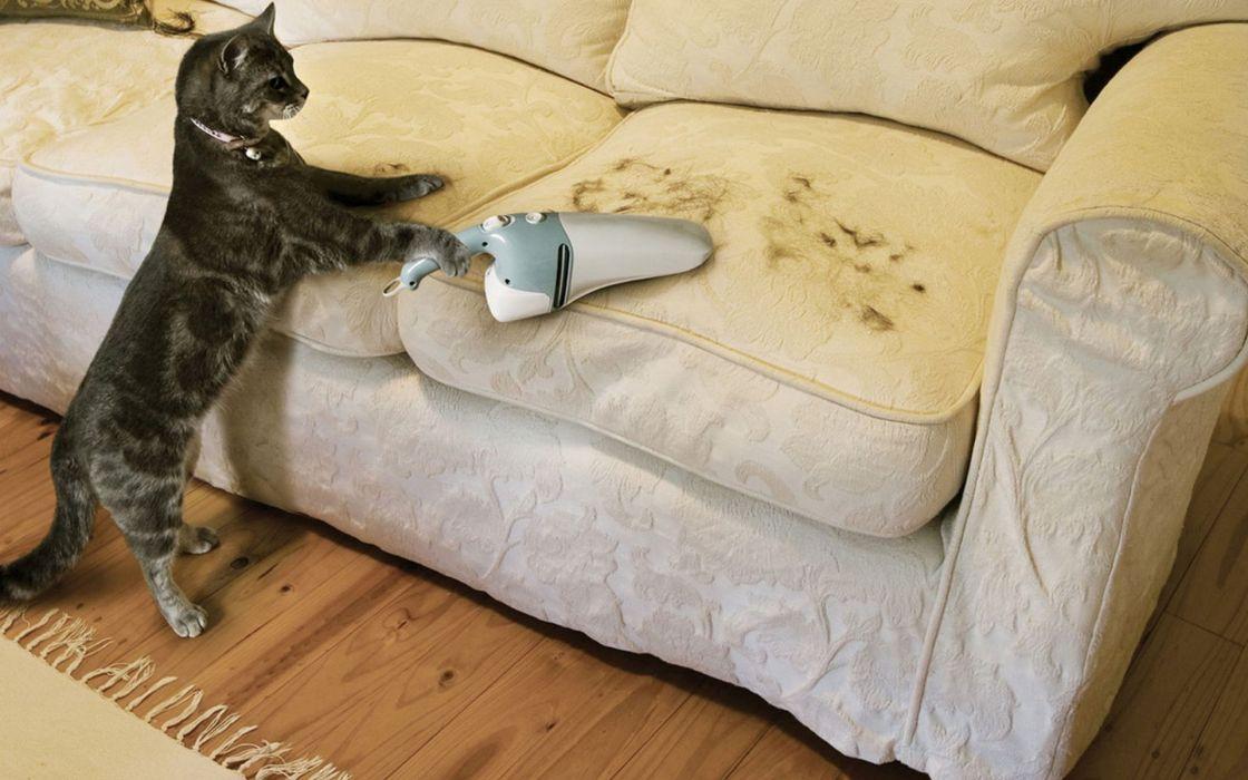 funny unusual cats wallpaper