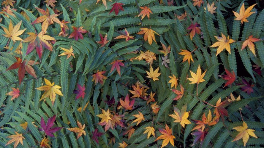 green japan tokyo leaves japanese ferns fallen leaves wallpaper