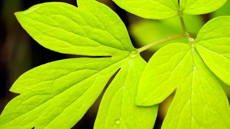 green drops dew leaf nature leaves wallpaper