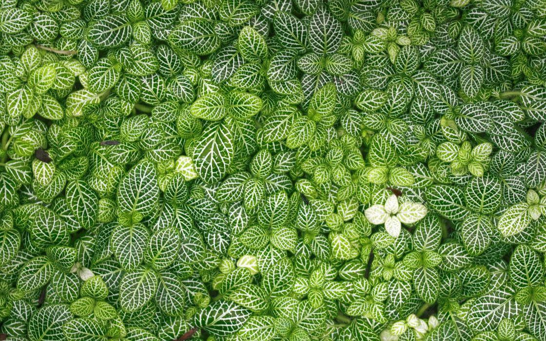 leaves grass green wallpaper