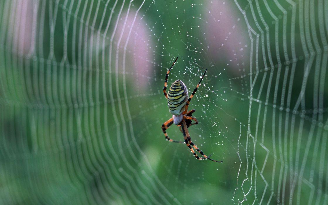 macro web nature Spider drops wallpaper