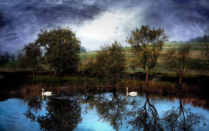 pond swans clouds trees landscape reflection birds wallpaper