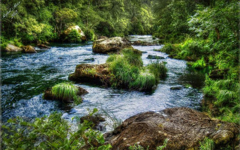 river forest rocks landscape wallpaper