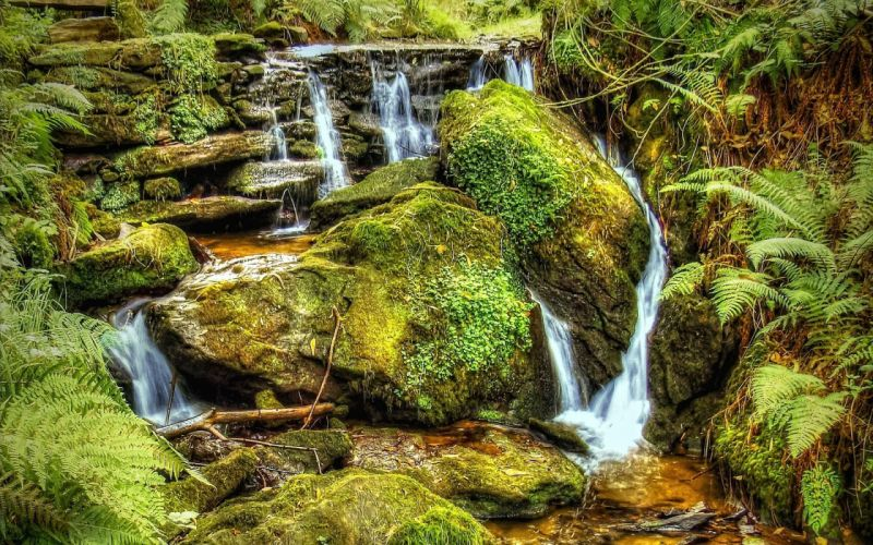 river stream waterfall stones moss plants nature wallpaper