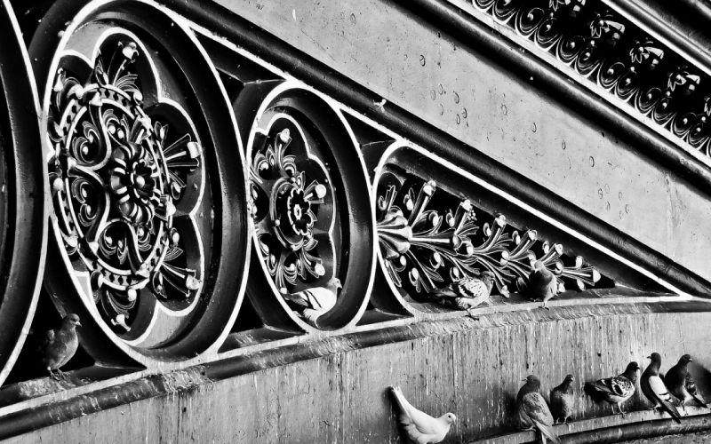 Bird Pigeon BW Wall wallpaper