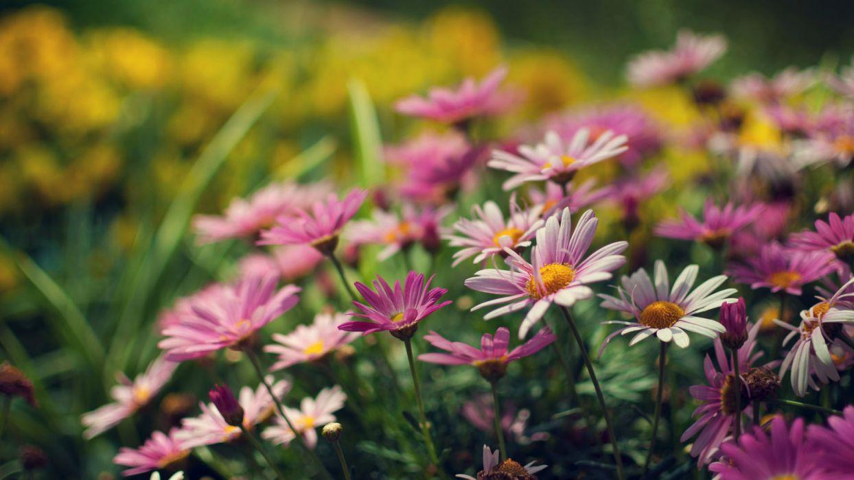 flowers macro wallpaper